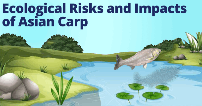 Ecological Risks and Impacts of Asian Carp