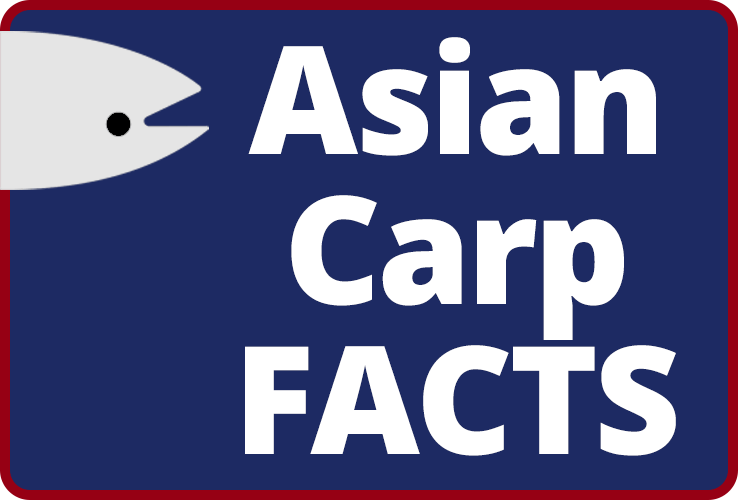 Asian Carp Facts